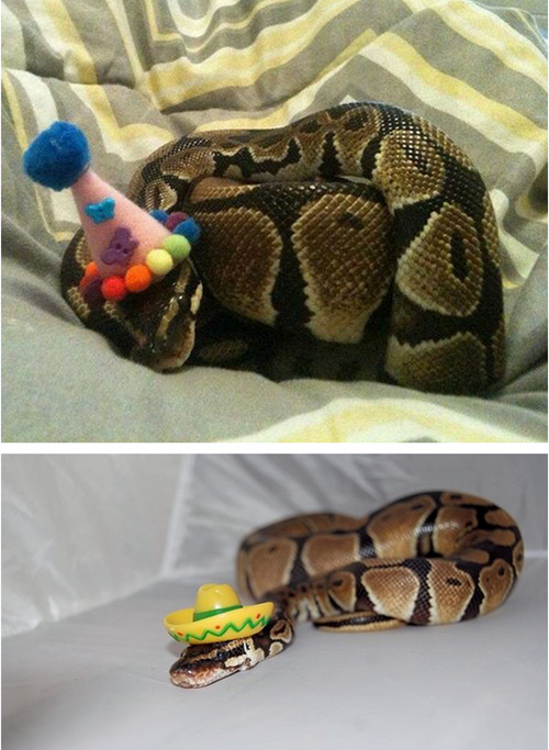 birthday_snake