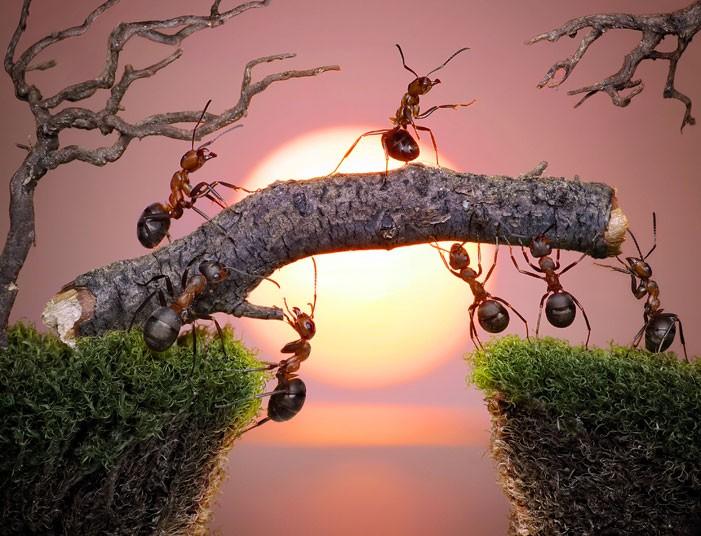 antsbridge