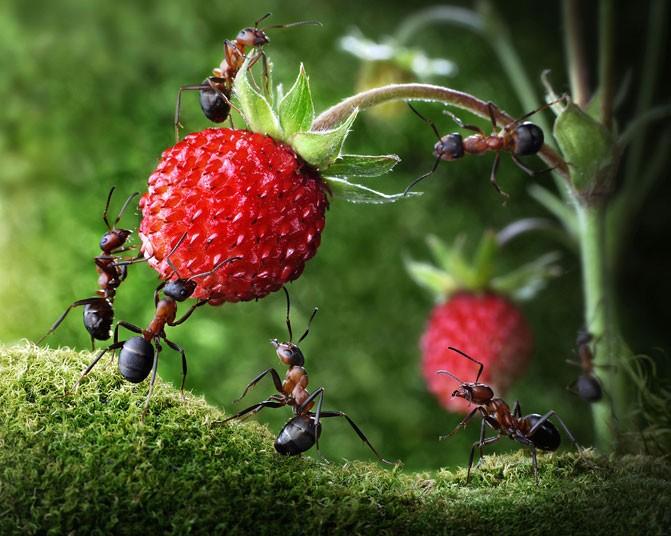 antsfruit