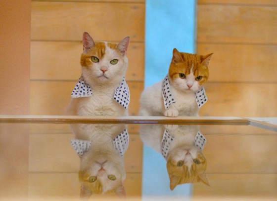 cat1 (2)