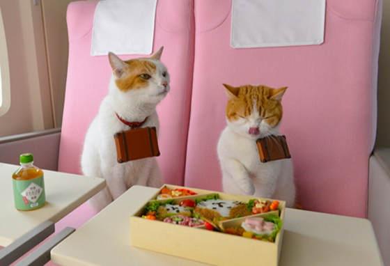 cat4 (2)