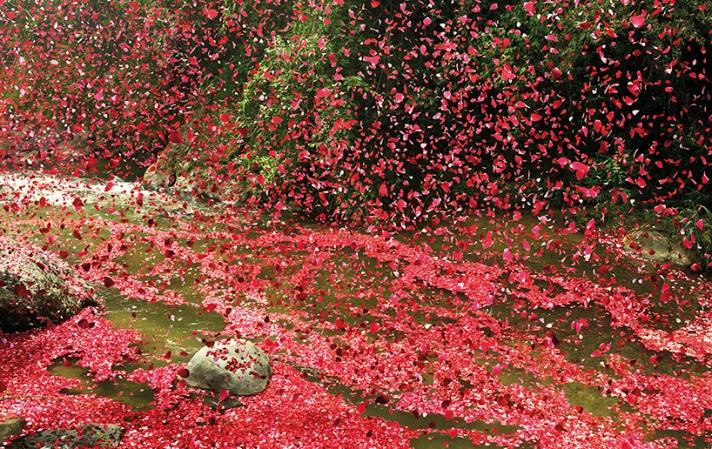 volcanoflowers6 (1)