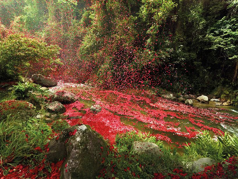volcanoflowers7